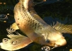 put your link on my PR3 Koi web site for one year