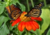 show you how to attract butterflies to your garden